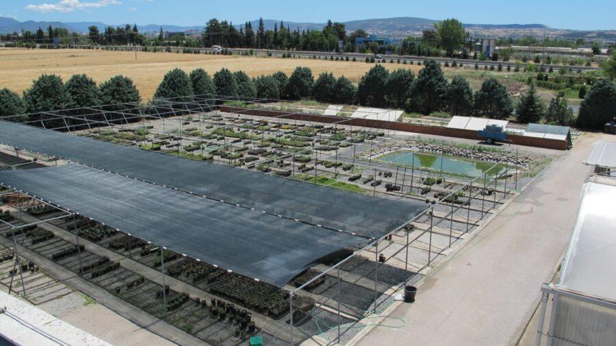 Διατήρηση ειδών της ελληνικής χλωρίδας (1)-min